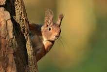 Foto Eichhörnchen
