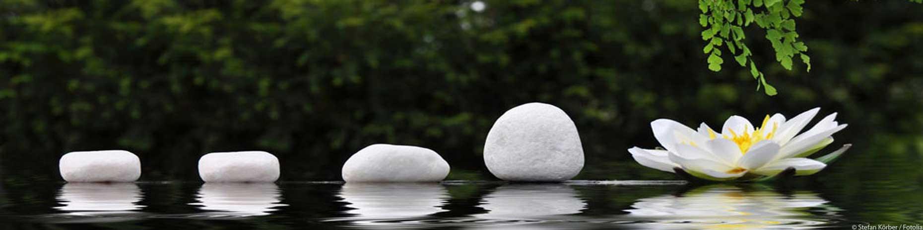 Headergrafik Steinreihe mit Seerose